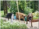 Zdjęcie 7 - Hotel dla zwierząt AZA Mezowo pomorskie