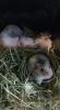 Zdjęcie 5 - Sklep zoologiczny Happy Pets - Żory