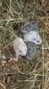 Zdjęcie 6 - Sklep zoologiczny Happy Pets - Żory