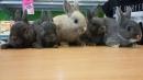 Zdjęcie 8 - Sklep zoologiczny Happy Pets - Żory