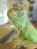 Zdjęcie 13 - Sklep zoologiczny Happy Pets - Żory
