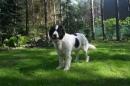 Zdjęcie 26 - Zakątek BERNA - hodowla Berneńskiego Psa Pasterskiego i Landseera